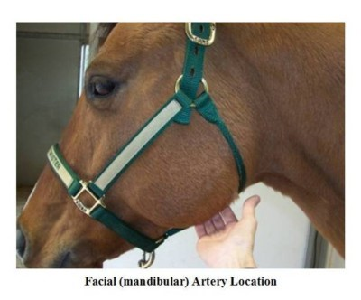 Horse Vital Signs