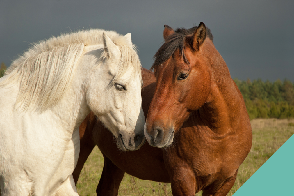 Signs that your horse is showing affection