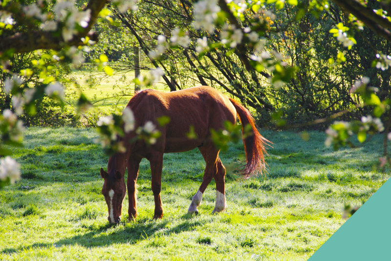 Top tips for spring feeding for healthy horses