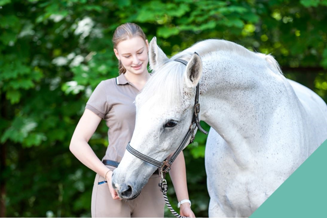 Clicker training your horse